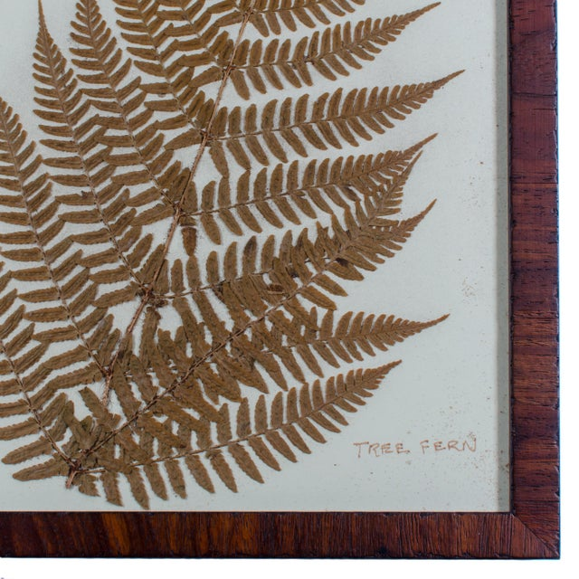 Contemporary Framed Pressed Botanical Tree Fern For Sale - Image 3 of 4