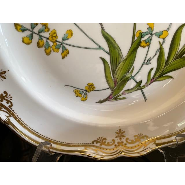 English Dinner Plate Stafford Flowers (Bone) by Spode features a white body that is adorned with glittering gold trim and...