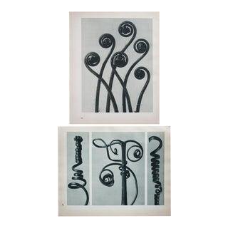 Blossfeldt 2-Sided Photogravure N47-48