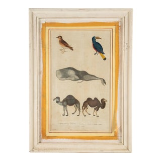 "Martyn ""Natural History"" Hand-Colored Plate, 1785 For Sale"