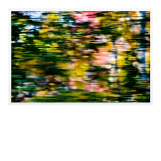 Through the Trees by Geoffrey Baris, Art Print in White Frame, Medium For Sale