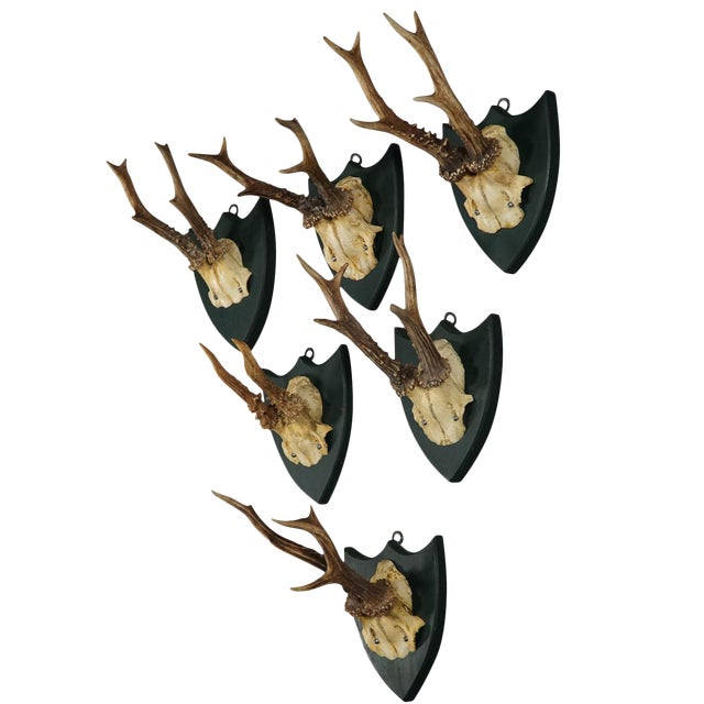 Six Large Antique Deer Trophies on Wooden Carved Plaques Ca. 1860 For Sale