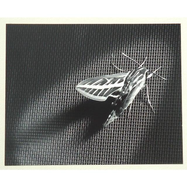 "Mid-Century Modern 1958 Dean W Hand ""Locust on Screen Door"" Mid-Century Photograph For Sale - Image 3 of 5"