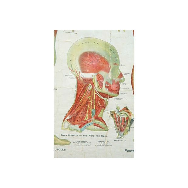Antique Large Professionally Framed Linen Anatomy Muscular System Medical Chart For Sale In Los Angeles - Image 6 of 7