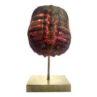 Turtle Shell Table Lamp For Sale