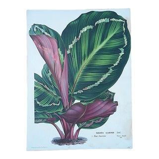 Antique Botanical Lithograph-19th Century-Folio Size For Sale