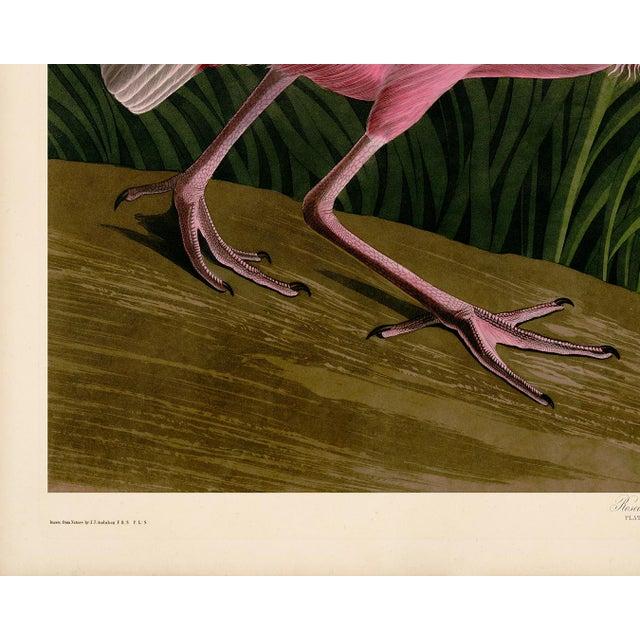 Coastal Audubon Roseate Spoonbill Giclee Print For Sale - Image 3 of 8