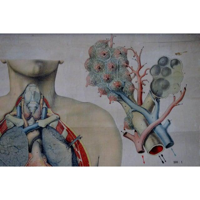 E. Hoelemann Antique Anatomical Chart - Image 4 of 7