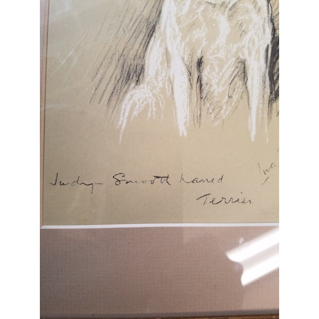 Fox Terrier Pastel Conte Drawing For Sale In Philadelphia - Image 6 of 6