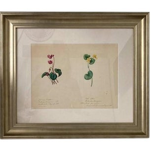 Mid 19th Century Botanical Watercolor Study of Flowers, Framed For Sale