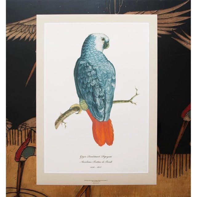 Set of extra large 6 gorgeous reproduction prints after watercolors of Parrots & Parakeets by Anselmus Boëtius de Boodt...
