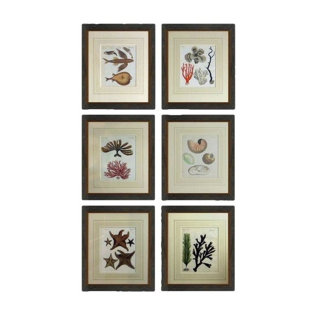 Antique Framed Nautical Engravings - Set of 6 - Image 1 of 8