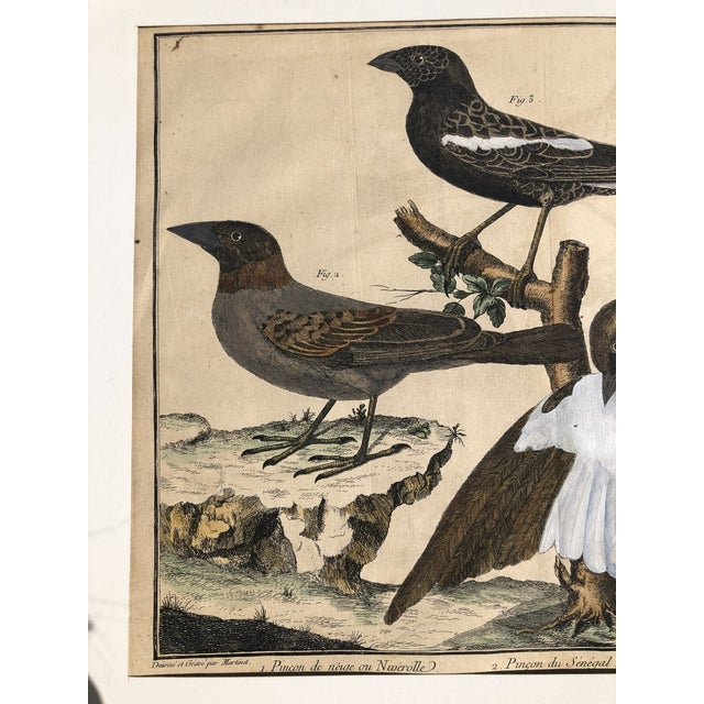 18th Century French Matted Bird Engraving by Martinet Featuring a Snow Pincer, a Senegalese Pincer and a Carolina Ortolan For Sale - Image 10 of 13