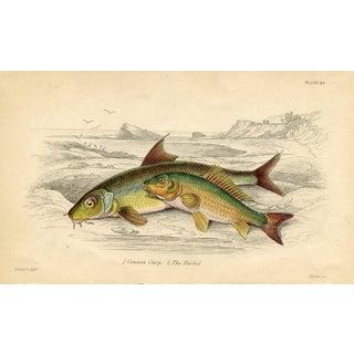 Carp Print, Circa 1843 For Sale