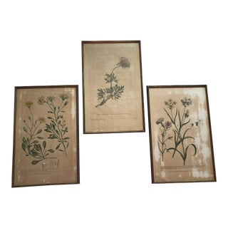18th C. English Botanicals - Set of 3 For Sale