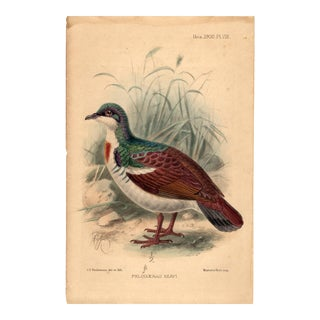 """Phlogoenas Keayi"", Limited Edition Bird Lithograph With Original Hand-Coloring and Pencil Signature by J. G. Keulemans 1900. For Sale"