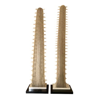 Sawfish Bill Rostrum - a Pair For Sale