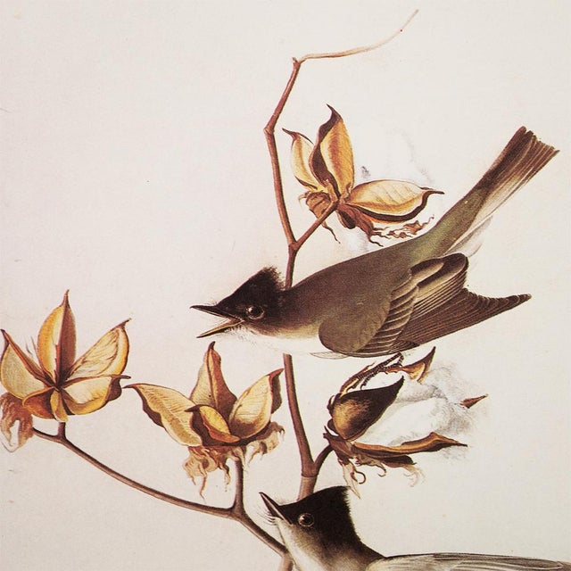 John James Audubon 1960s Cottage Style Lithograph of an Eastern Phoebe by Audubon For Sale - Image 4 of 9
