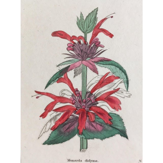 Mid 19th Century Botanicals by Benjamin Maund C. 1854 For Sale - Image 5 of 8