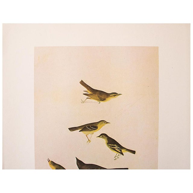 American Classical Birds of America by John James Audubon, 1966 Vintage Print For Sale - Image 3 of 8