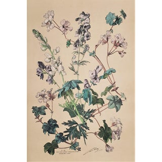 C1880 French Botanical Chromolithograph, Matted For Sale