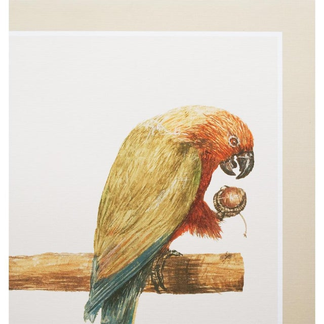 1590s Large Print of Alexandrine Parakeet & Red-Breasted Parakeet by Anselmus De Boodt For Sale - Image 4 of 9