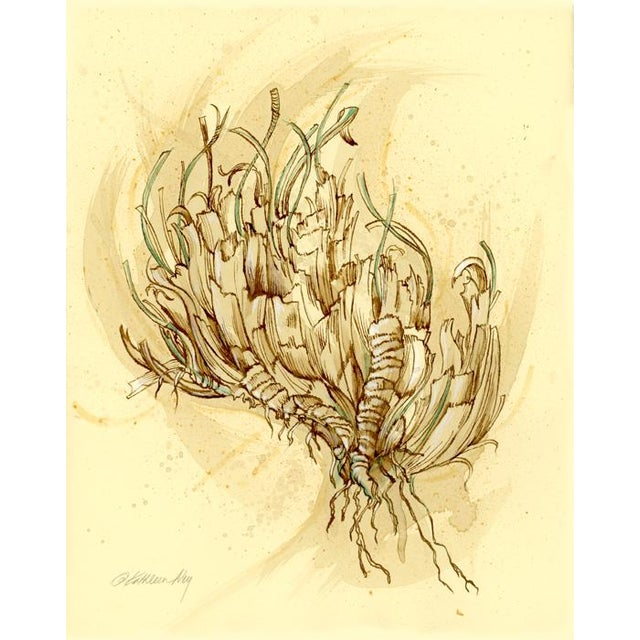 Natural History Botanical Pen and Ink Drawing, Plant Life 2 by Kathleen Ney For Sale