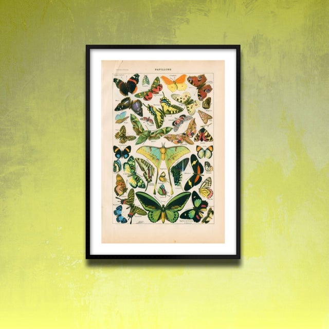 Vintage Butterflies Archival Print For Sale - Image 4 of 4