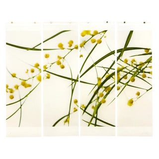 "Jeri Eisenberg ""Acacia No.3"" Botanical Nature Painting on Paper For Sale"
