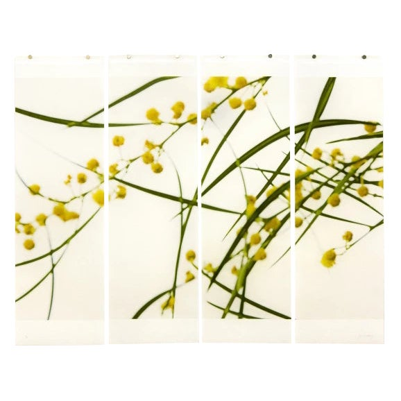 "Jeri Eisenberg ""Acacia No.3"" Botanical Nature Painting on Paper For Sale"