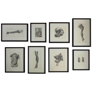 Set of Eight Anatomical Lithographs After Albrecht Von Haller For Sale