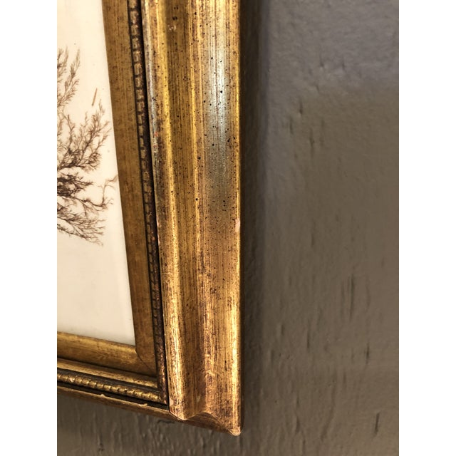 19th Century Pressed Organic Botanicals in Giltwood Frames -Set of 3 For Sale In Philadelphia - Image 6 of 11