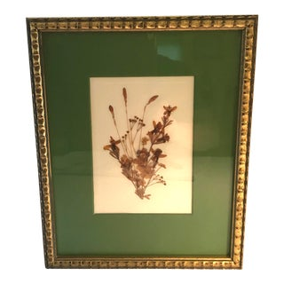 Mid 20th Century Vintage Framed Dried Botanical Wall Object For Sale