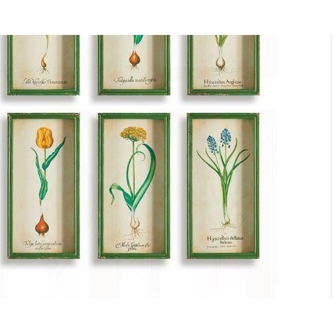 This set of six colorful tulip bulb prints are traditional, yet playful. The antiqued green shadow box frames give them an...
