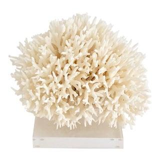 Natural Birdsnest Coral on Lucite Base For Sale