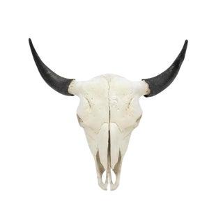 American Bison Skull With Horns Wall Mount