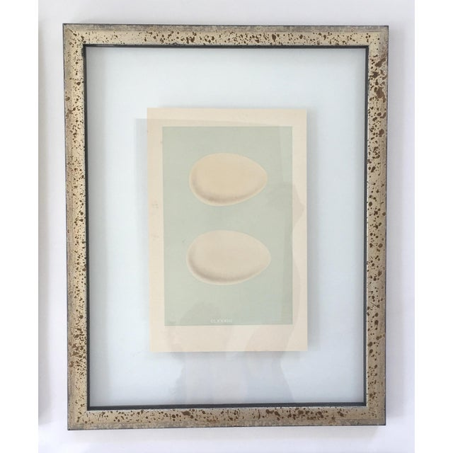 Late 19th Century Framed Antique Morris Egg Prints - Set of 4 For Sale - Image 5 of 11