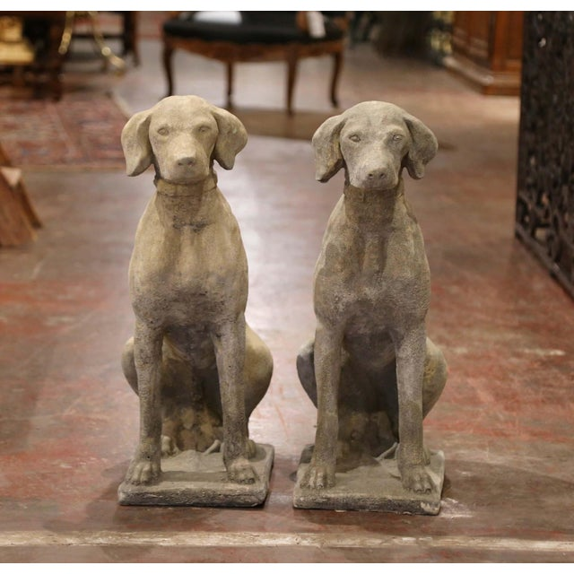 The hunting dogs sculptures were crafted in France, circa 2000. The stately, vintage Labradors with collar are set on a...
