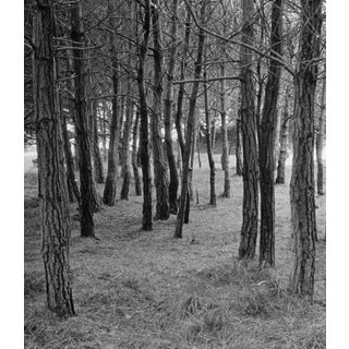 Forest Black and White Photo by Garo 70s For Sale