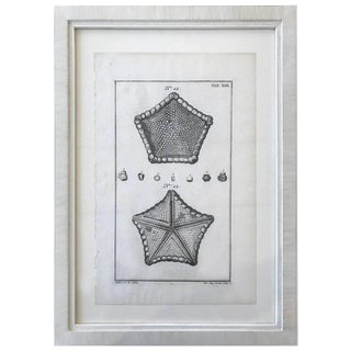 18th Century Rare French Engraving of Sea Star For Sale