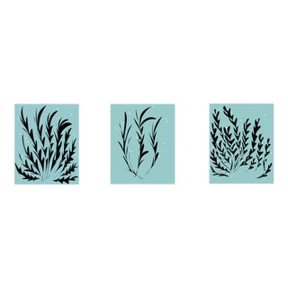 Ocean Seaweed Limited Edition Canvas Prints - Set of 3 For Sale