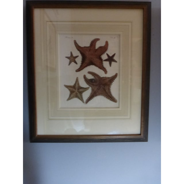 Antique Framed Nautical Engravings - Set of 6 - Image 4 of 8