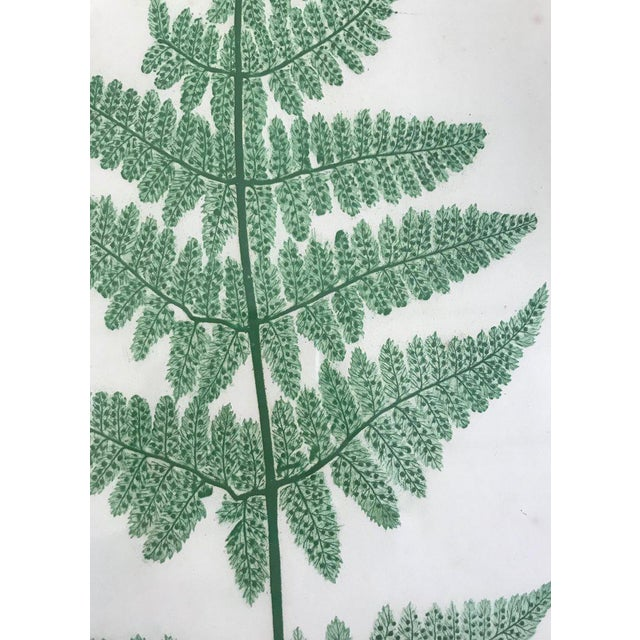 Mid 19th Century 19th Century Bradbury and Evans Nature Printed Fern Print For Sale - Image 5 of 7