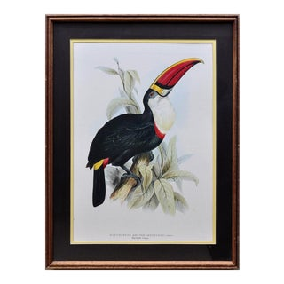 """Beautiful Framed (19""""x25"""") Print of a Red Billed Toucan For Sale"""