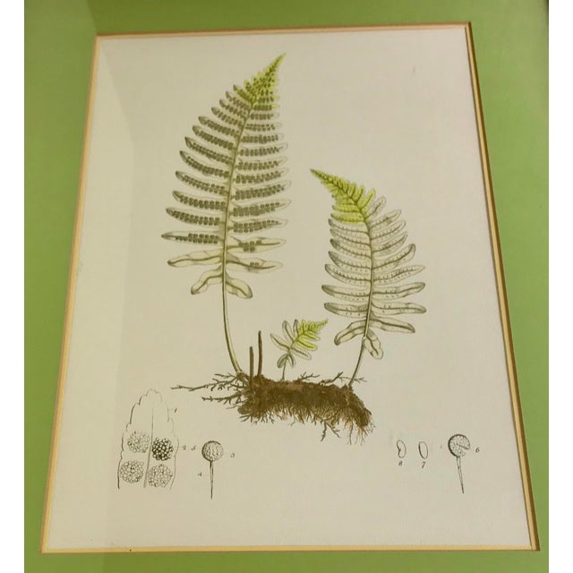 Fern print by Harry Shoicher Corporation before the firm merged to become the present day ubiquitous Soicher-Marin...