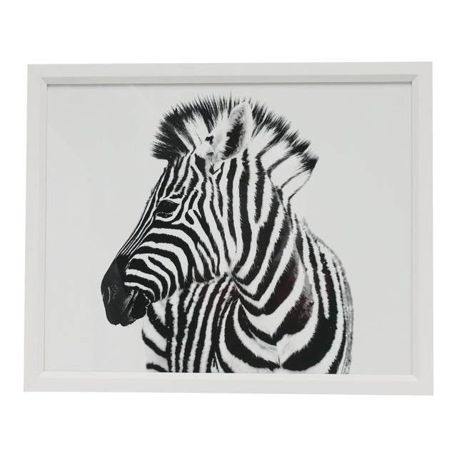 English Black and White Zebra Animal Photo Print With White Frame For Sale