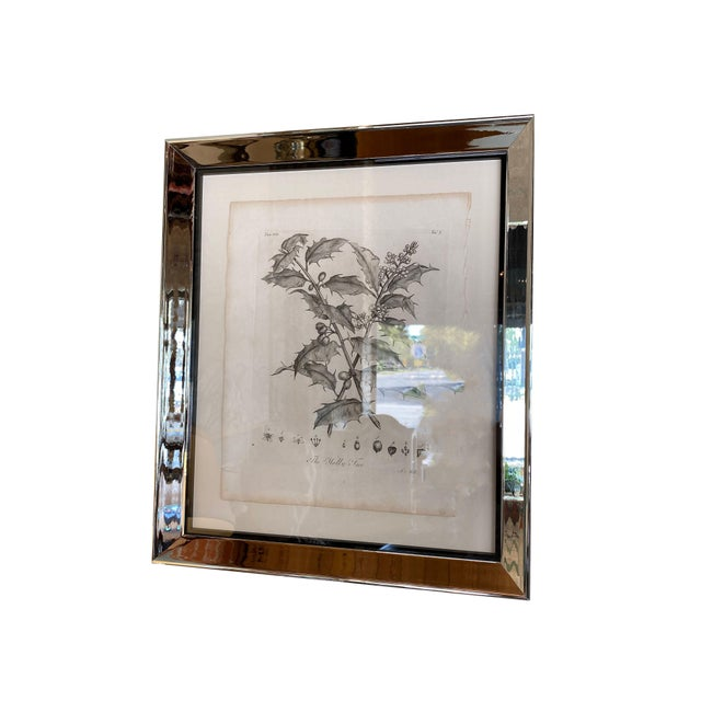 Antique Botanical Prints - Set of Six For Sale In Dallas - Image 6 of 8