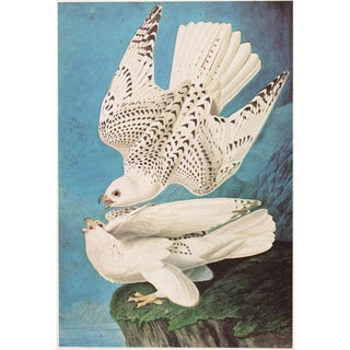 """1966 Cottage """"Gyrfalcon"""" Vintage Print by Audubon For Sale"""