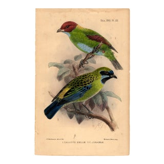 """1. Calliste Emiliae; 2. C. Johannae"", Limited Edition Bird Lithograph Originally Hand-Colored and Pencil Signed by J. G. Keulemans Del. Et Lith. 1901 For Sale"