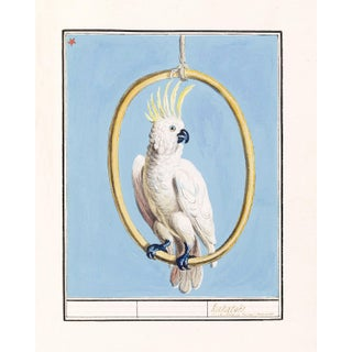 White Cockatoo Bird on Blue Background Unframed Pigment Print For Sale